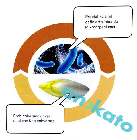Darm_Probiotika und Prebiotika