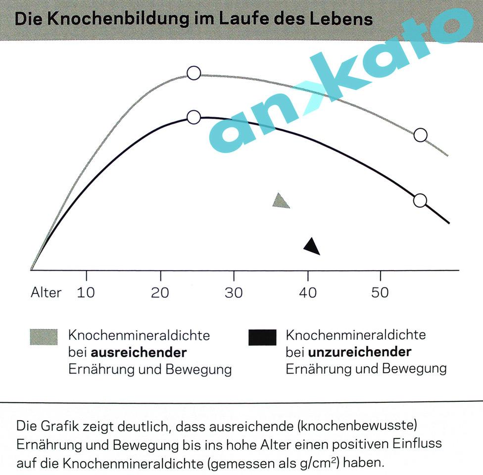 Orthonorm os Knochenbildung